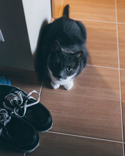 EyeEmNewHere The Week On EyeEm Canon Canon6d Pets Kaliningrad Russia Indoors  Cat Pet Portraits