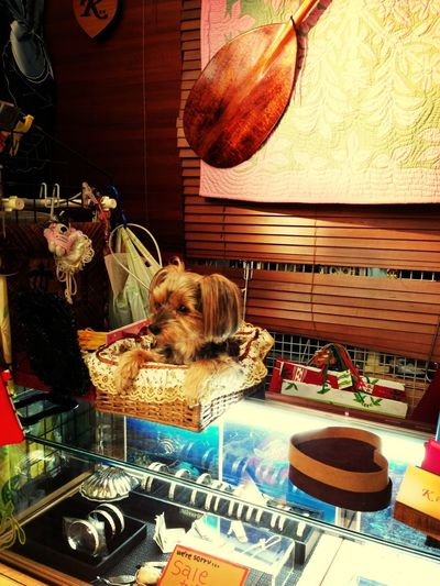 In the basket!!! Pupu♡