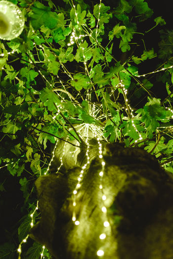 Low angle view of illuminated lights on tree
