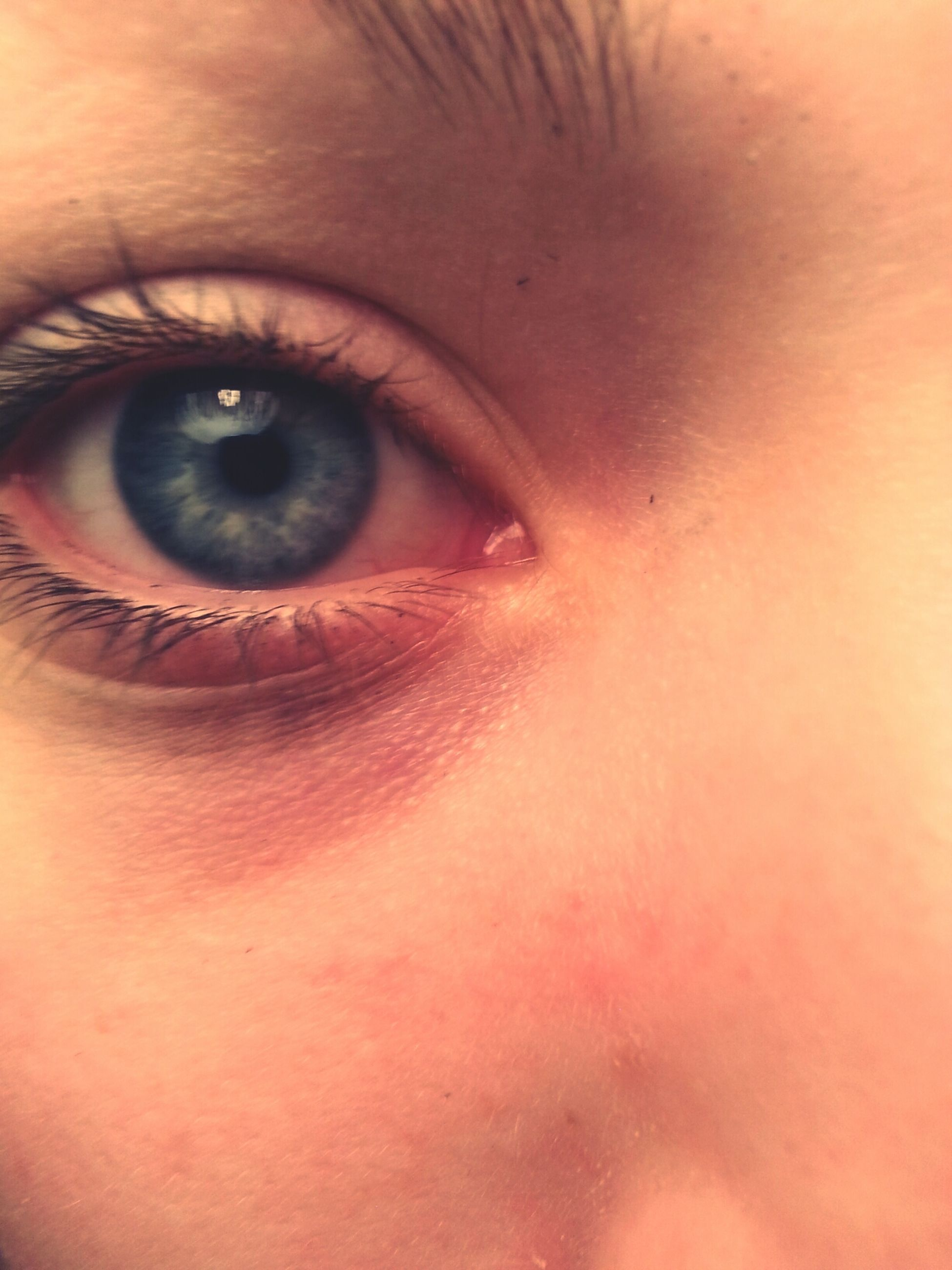 human eye, indoors, close-up, eyelash, eyesight, extreme close-up, looking at camera, portrait, full frame, part of, sensory perception, backgrounds, extreme close up, human skin, iris - eye, eyeball, human face