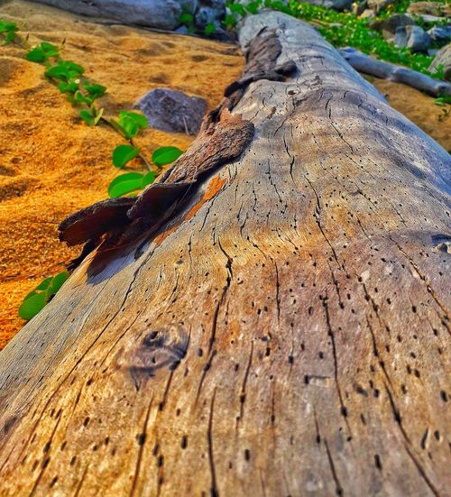 Tree Leaves🌿 Green Leaves Stem Orange Sand Branch Log Tree Log Malaysia Malaysia Truly Asia Terengganu, Malaysia Dungunterengganu Dungun Dungunbeach Android Samsung Beach Blue Water Evening Sky Beach Photography Shadow Sand Dune High Angle View Textured  Animal Themes Arid Landscape My Best Travel Photo