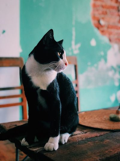 🐱🐱 Thailand🇹🇭 Representation Animal Themes Animal Animal Representation Art And Craft Indoors  Sitting Cat Day Black Color Domestic Cat Domestic Animals No People Domestic Focus On Foreground Mammal Creativity Toy Feline Pets