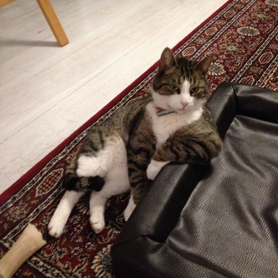 Coolaste katten i stan :) Hanging Out Hello World Enjoying Life Check This Out