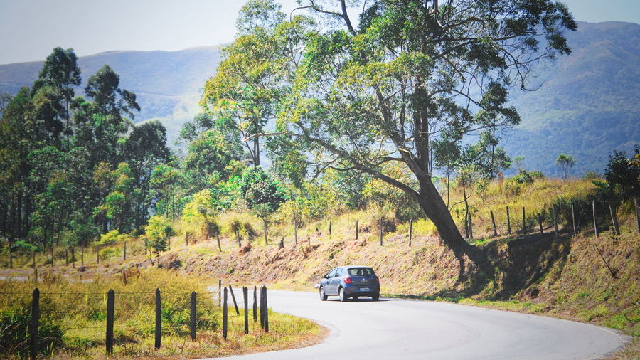 Curve Tree Car Car On The Road Day Estrada Dos Romeiros Growth Land Vehicle Landscape Nature No People Outdoors Road Scenics Transportation Tree