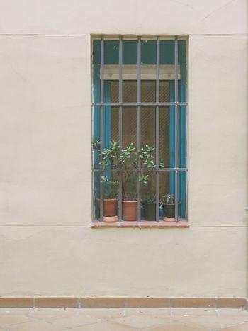 Desde mi ventana Desdemiventana RejaPlantas