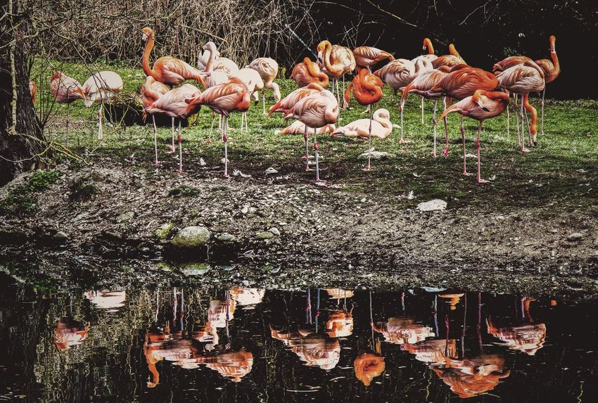 Birdwatching Flamingo At The Zoo Zoophotography Birds Of EyeEm  From My Point Of View Nature_collection Down By The Sea