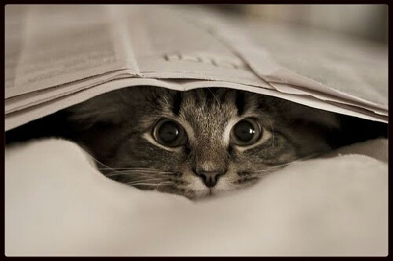 love <3 EyeEm Best Shots Chilling Black & White Cats