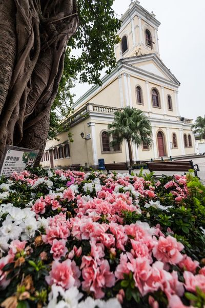 Holiday in Macau - Old Taipa Village Macao Architecture ASIA Beauty In Nature Building Exterior Built Structure City Day Flower Fragility History Holiday Low Angle View Macao  Macao China Macau Macau, China Nature No People Old Outdoors Plant Taipa  Travel Destinations Vacation Village