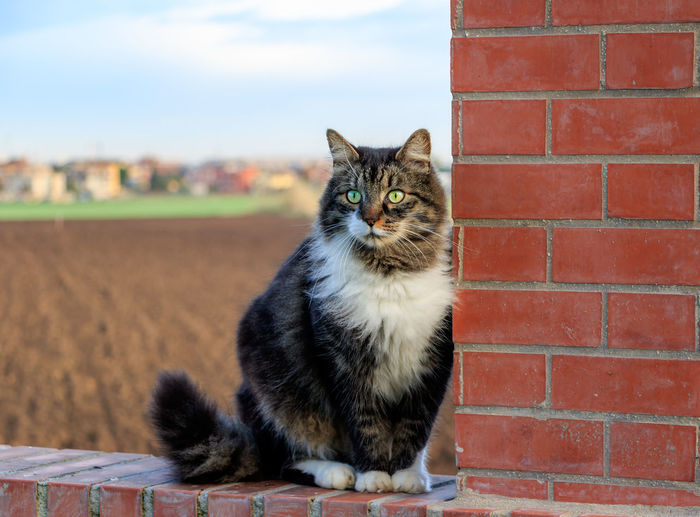 Cat Sitting On Brick Wall By Agricultural Field Against Sky