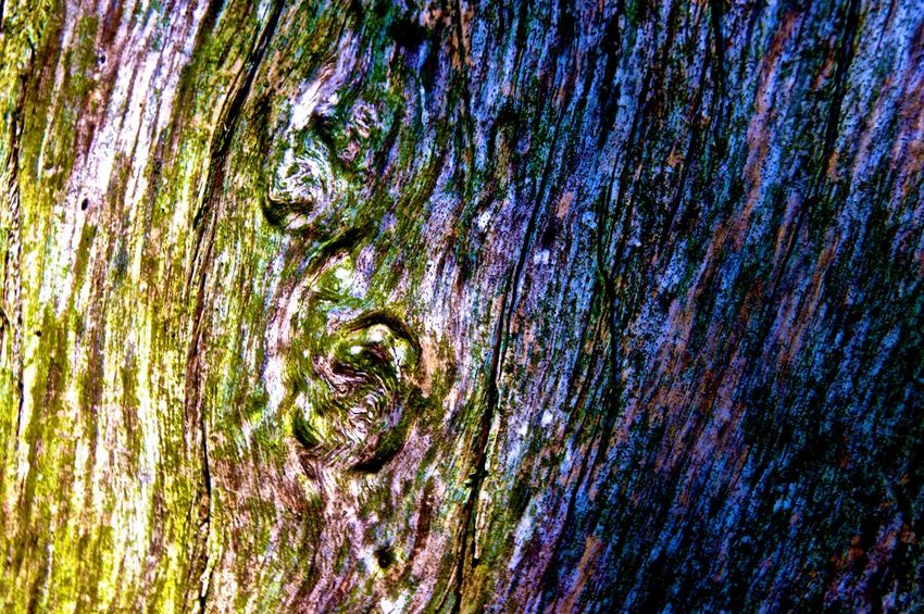 Backgrounds Bark Beauty In Nature Close-up Day Full Frame Growth Knotted Wood Nature No People Outdoors Pattern Textured  Tree Tree Trunk Wood - Material Wood Grain
