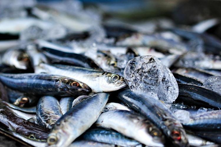Fish FishMarket