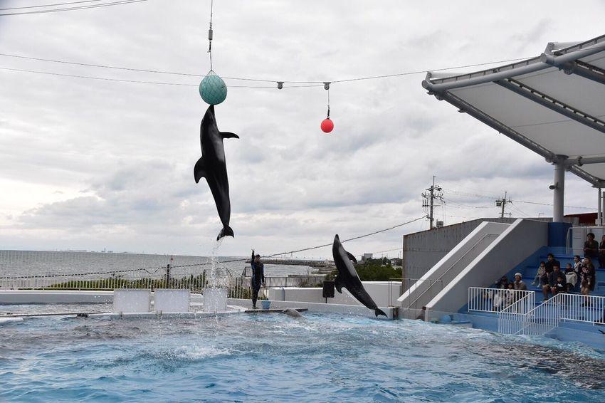 Japan Misaki Park OSAKA Dolphin Dolphins