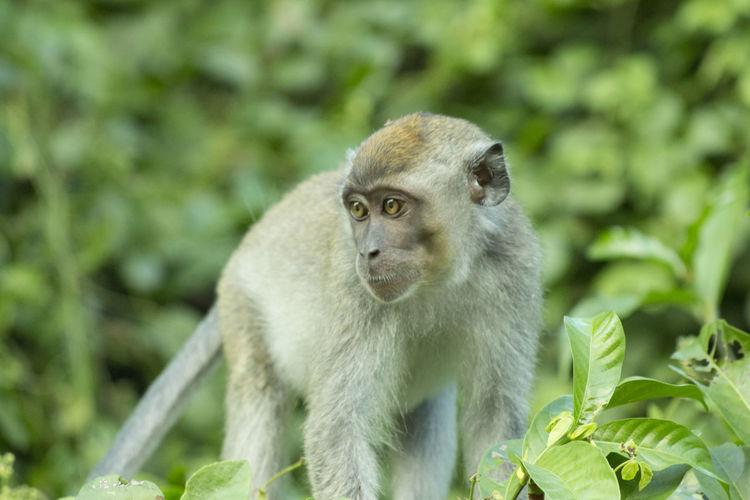 Wildlife & Nature Travel Jungle Nature Wildlife Amazingborneo Monkey Kinabatangan River