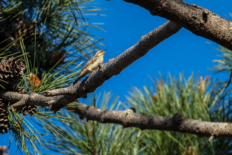 Beauty In Nature Beauty In Nature Bird Photography Branch Eurasian Wryneck European Birds Jynx Torquilla Nature Nature Photography No People Western Palearctic Wildlife & Nature Wildlife Photography
