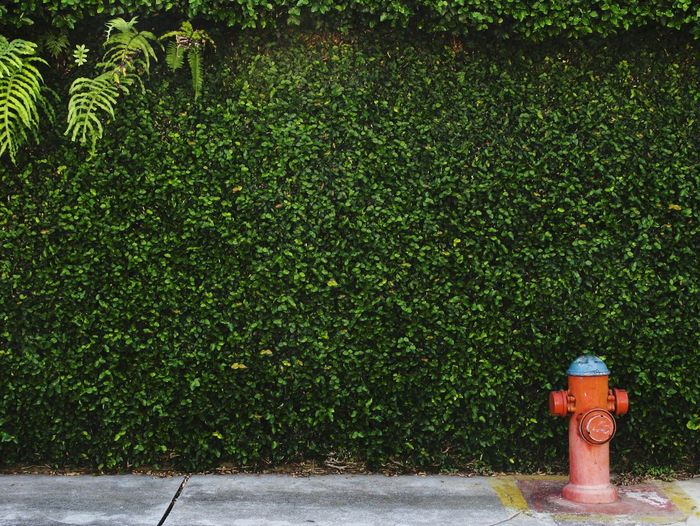 Safety Green Color Fire Hydrant Grass Nature Vale Do Paraíba Saojosedoscampos City Life Minimalistic Background Minimalism Minimalist City Streetphoto Streetphoto_color Street Photography Flowers,Plants & Garden Hidrante Green Leaves Greenery Green Wall Outdoors Protection Red Red Color EyeEmNewHere The Graphic City