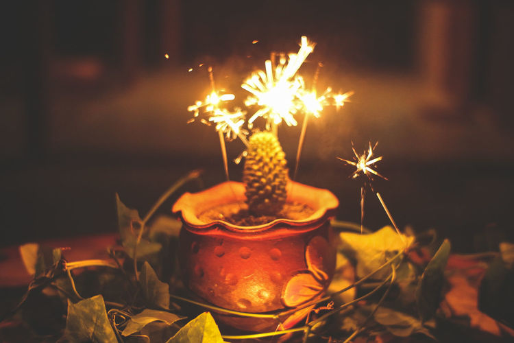 Cactus Cactus Garden Winter Flame Heat - Temperature Celebration Flower Burning Diya - Oil Lamp Tradition Close-up Firework - Man Made Object Tea Light Entertainment Oil Lamp Sparks Sparkler Exploding Fire - Natural Phenomenon Lit Firework Candle Firework Display Long Exposure