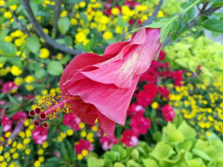 The Purist (no Edit, No Filter) Selective Focus Like Fantasy No Filter, No Edit, Just Photography No Edit/no Filter Nature Growth Pink Color Flower Bougainvillea Flower Head No People Day Nature Leaf Fragility Plant Growth Multi Colored EyeEm Best Shots EyeEm Best Shots - Nature EyeEm Flowers Collection Colors EyeEm Nature Lover Exceptional Photographs Breathing Space The Week On EyeEm EyeEmNewHere