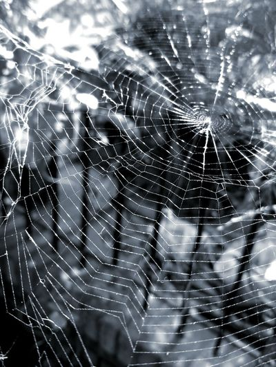 Black widow Spider Web Close-up Natural Pattern Beauty In Nature Blackandwhite Photography