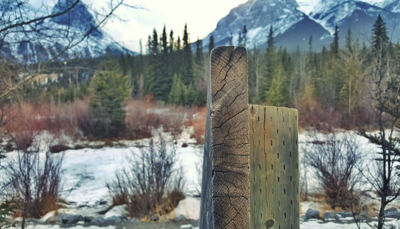Nature Winter Snow Cold Temperature Wood - Material Outdoors No People Sky Beauty In Nature Day Tree Canmore Alberta Canada