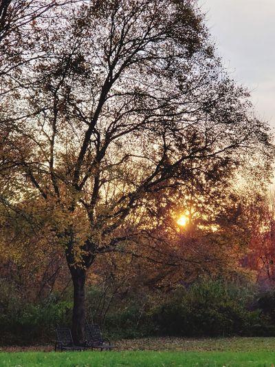 Tree Sunset Sunlight Branch Sky Grass
