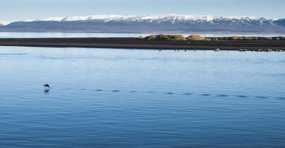 View of ducks swimming in lake