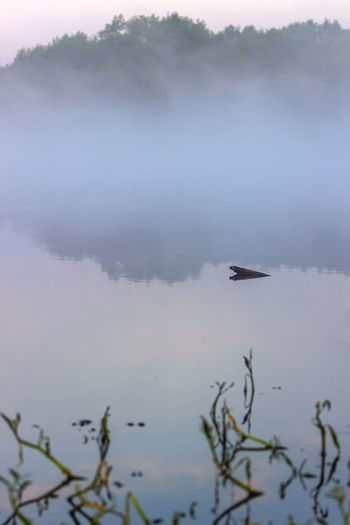 Fog over the river. Early morning. Beauty In Nature Day Fog Lake Nature No People Outdoors River View Sky Tree Water