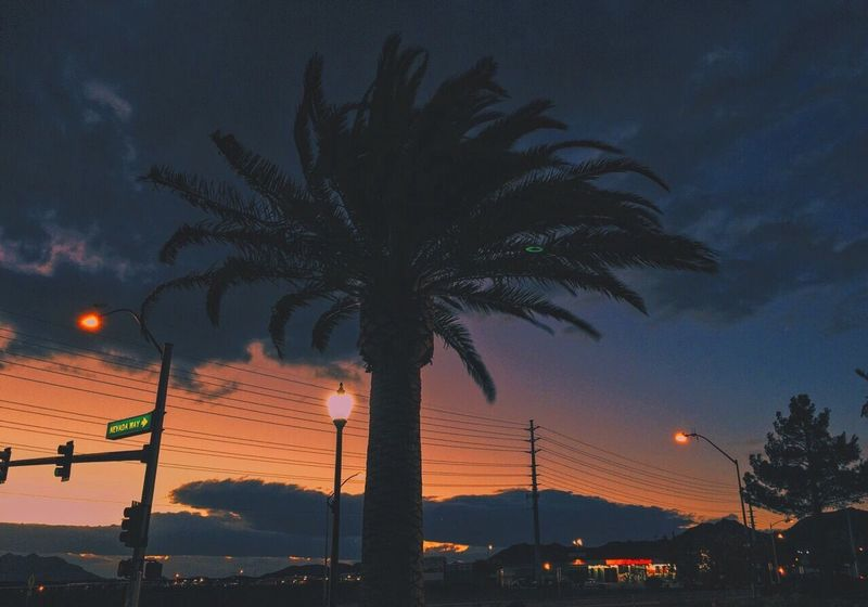 downtown BC Palm Tree Tree Silhouette Sky Sunset Nature No People Night Outdoors Beauty In Nature Nevada Boulder City Nevada EyeEmNewHere