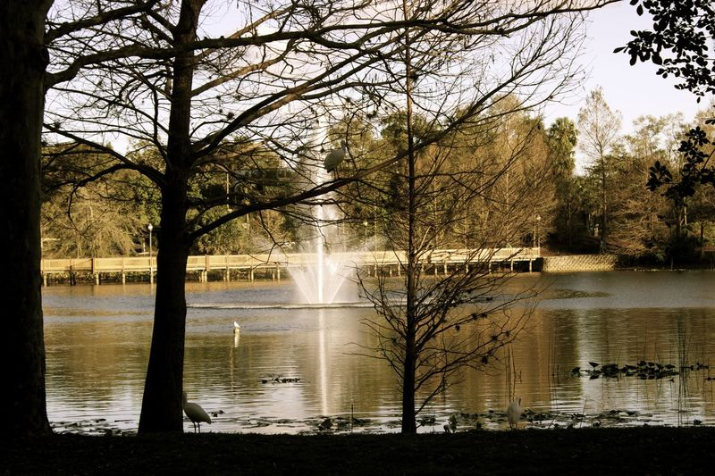 By the Lake in Maitland. Antique Beautiful Central Fade Silhouette Bare Tree Beauty In Nature Bird Branch Day Fall Florida Irrigation Equipment Lake Nature No People Outdoors Reflection Scenics Sky Tranquil Scene Tranquility Tree Water Waterfront
