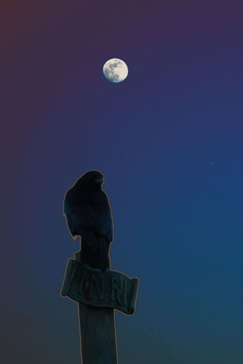 Astronomy Bird Blue Clear Sky Crow Dark Darkness And Light Darkside Death Easter Exceptional Photographs Focus On Background Good Friday GoodFriday  Illuminated INRI Low Angle View Moon Nature Night No People Outdoors Raven Silhouette Sky