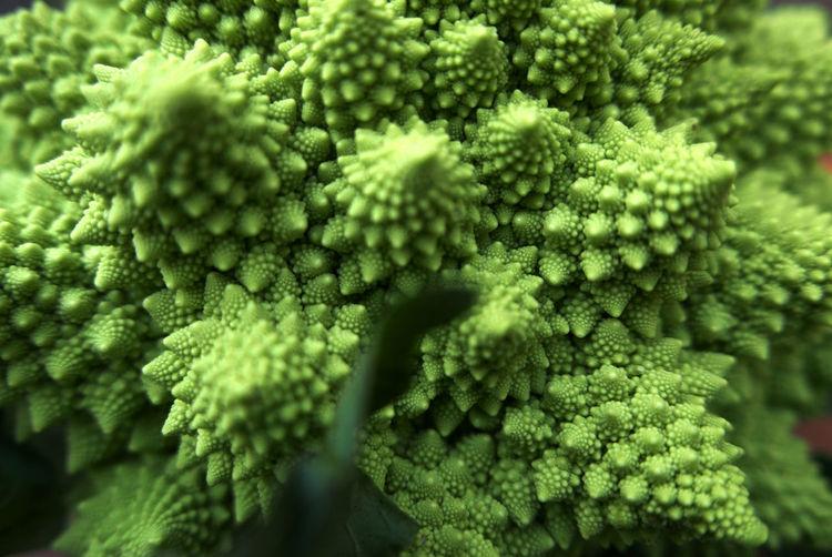 Full frame shot of romanesco broccoli