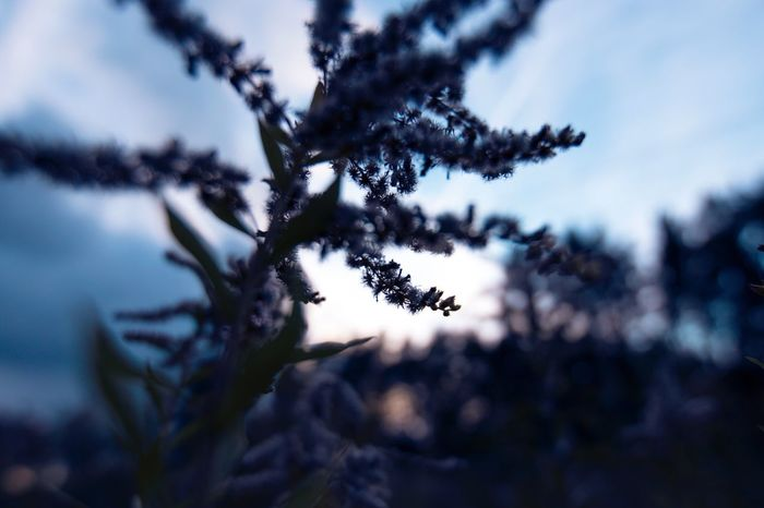 Nature No People Close-up Outdoors Tranquility Flower Beauty In Nature Freshness Growth Sky Low Angle View Landscape Sanset