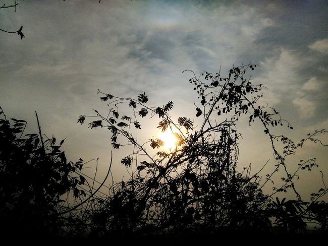 Sunrise Trees And Sky Early Mornings NatureAtItsFinest PhonePhotography 6 O'clock Morningjog Branches And Leaves