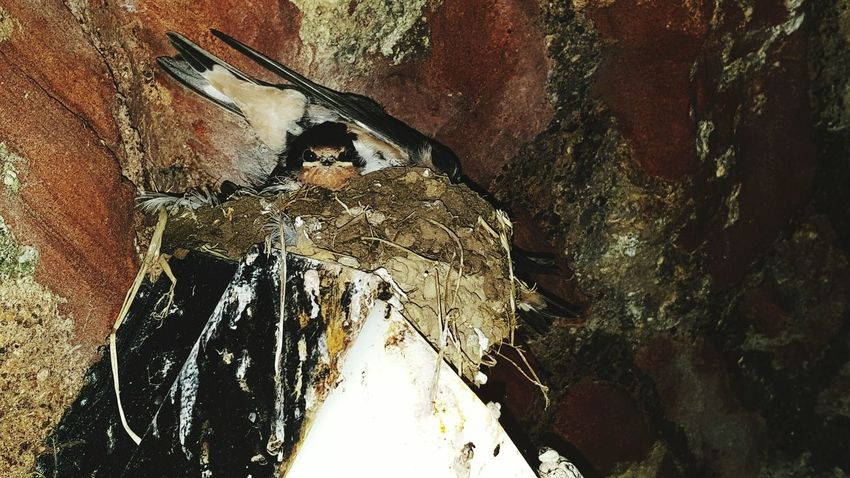 Taking Photos Baby Birds Birds_collection EyeEm Birds Chicks Bird Nests Summer2015 Castle Castle Ruin Scotland
