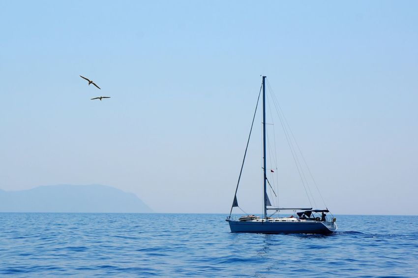 Seascape Sea Sea&sky Aegean Sea Travel Love ♥ Couple Seabirds Boats⛵️