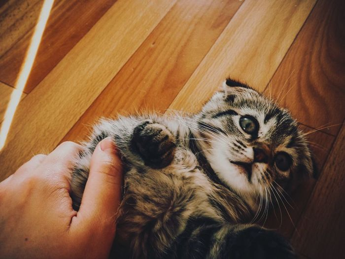 Domestic Cat Pets One Animal Animal Themes Feline Domestic Animals Real People Mammal Lifestyles Human Body Part Friendship Cat Pet Owner Indoors  Human Hand Close-up People One Person Day