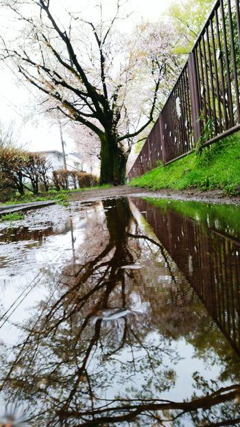 雨に花咲き木に水流れる。