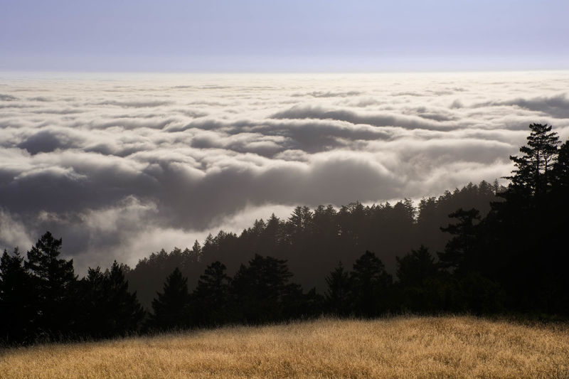 Layers of Trees and Fog Cloud Cloudscape Dramatic Sky Fog Forest Nature Ocean Outdoors Sky Sunset Tranquil Scene