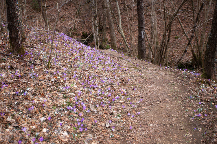 Purple flowering plant in forest
