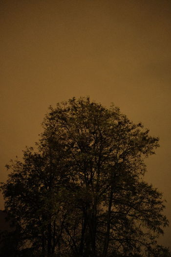 Low angle view of silhouette tree against clear sky at night
