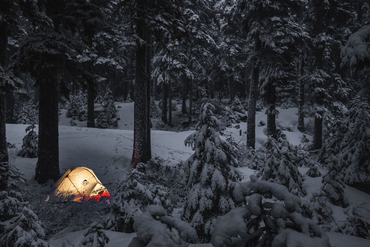 Tree Plant Snow Cold Temperature Winter Nature Land Beauty In Nature Forest Tranquility No People Tranquil Scene Scenics - Nature Outdoors Covering Tree Trunk Non-urban Scene Trunk Pine Tree Growth
