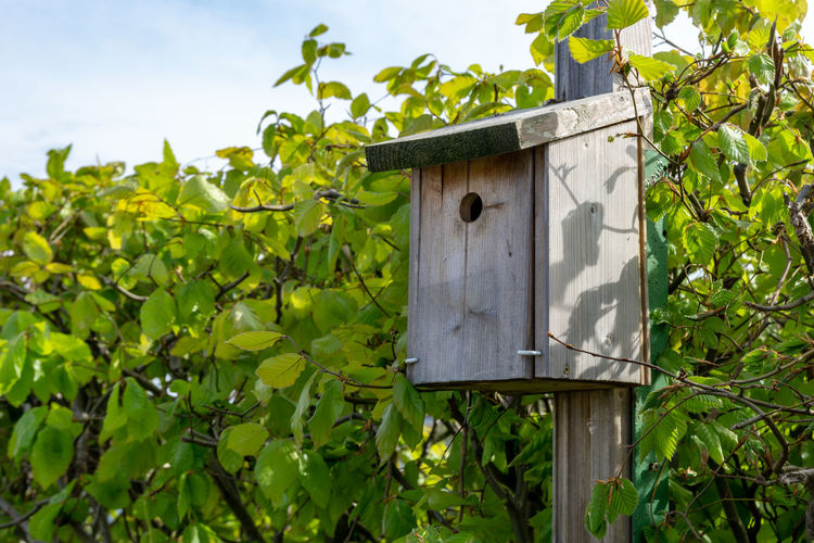 birdhouse in the garden - hedge during springtime Leaf Plant Plant Part Day Nature No People Growth Green Color Tree Focus On Foreground Birdhouse Wood - Material Hanging Low Angle View Outdoors Close-up Mailbox Security Architecture Land Nature