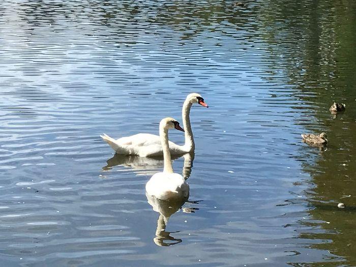 Lake Animal