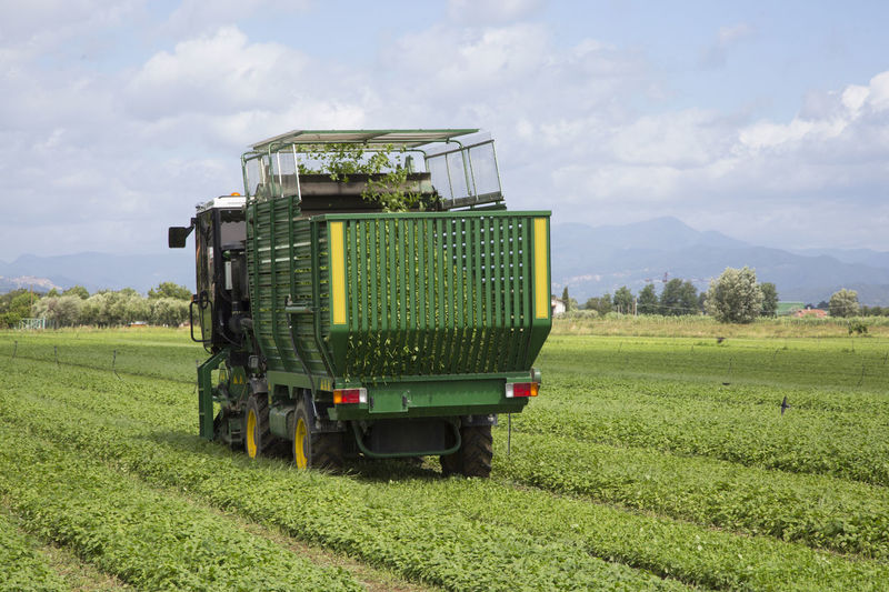 Agriculture Basil Farm Farm Vehicles Field Green Color Harvest Harvesting Hindustrial Industry Land Vehicle Landscape Machinery Nature Outdoors Rural Scene Transportation