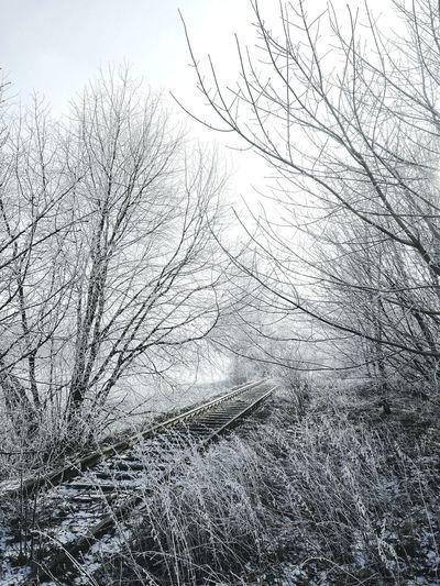 Trees Railway