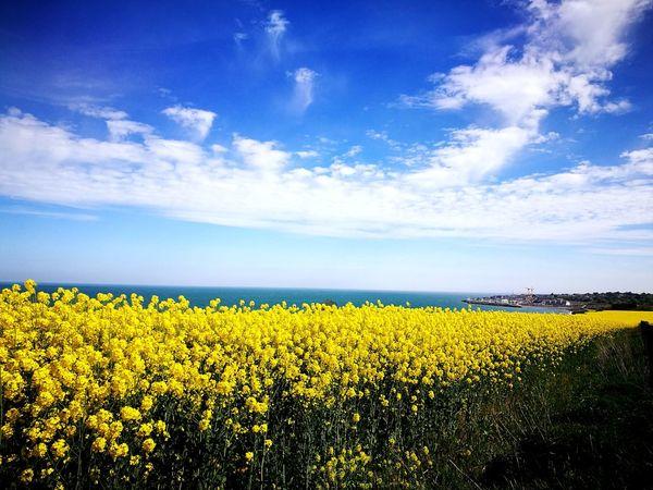 Field EyeEm Nature Lover EyeEm Best Shots - Nature Sunlight Nature Ireland🍀 Bray, Ireland Blossom In Bloom