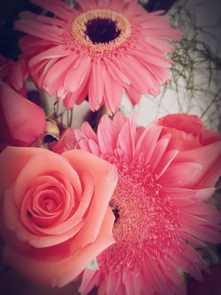 Pink Color Flower Head Petal Flower Fragility Close-up Freshness Indoors  Beauty Rose - Flower Nature Beauty In Nature Gift Roses Details Pink Flowers