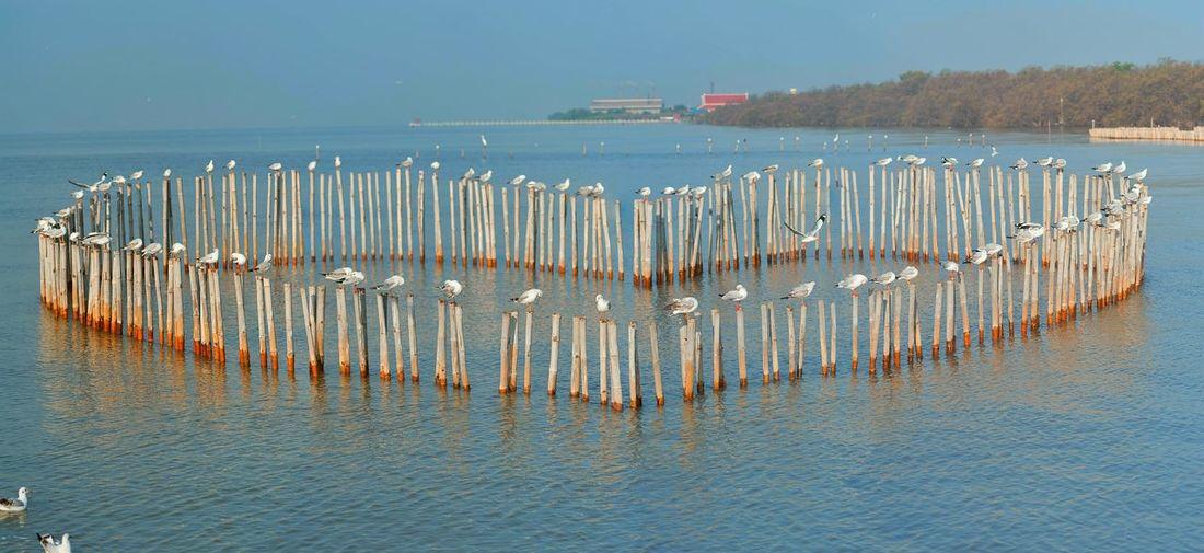 หัวใจ บางปู Water Reflection Sea Buoy Floating On Water No People Large Group Of Animals Nature Flamingo Sky Day Bird Mammal Nautical Vessel Politics And Government Outdoors Cold Temperature Winter