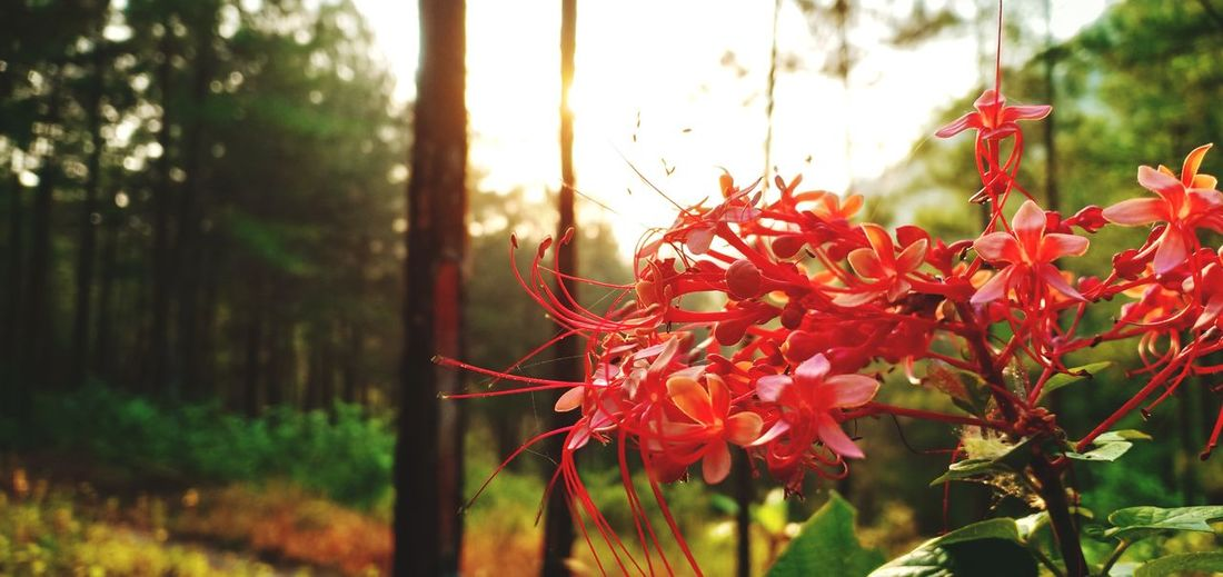 Flower on the Morning Gombong Kebumen Moments Goodday Beauty Morning Hill Sunrise Flower Flower Head Red Close-up Plant