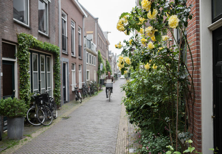 Architecture Building Exterior Built Structure City Cyclist Day Haarlem House Narrow Street No People Outdoors Roses Street Streetphotography Tree Yellow Rose Paint The Town Yellow Connected By Travel