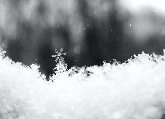 Standing out from the crowd. Bokeh Black And White Love Nature Full Frame Macro No People Snow Astronomy Cold Temperature Star - Space Tree Mountain